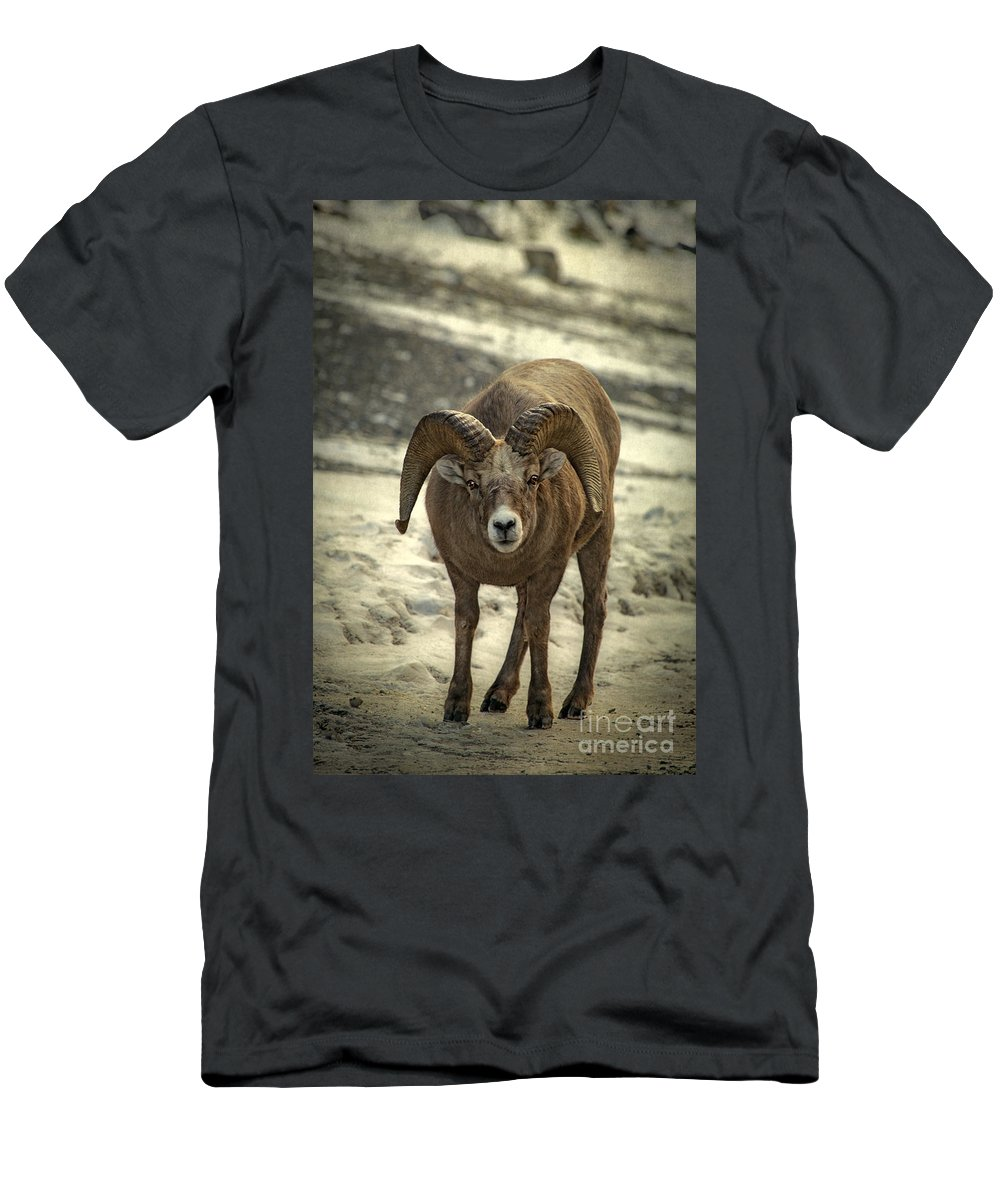 Bighorn Men's T-Shirt (Athletic Fit) featuring the photograph A Close Encounter by Evelina Kremsdorf
