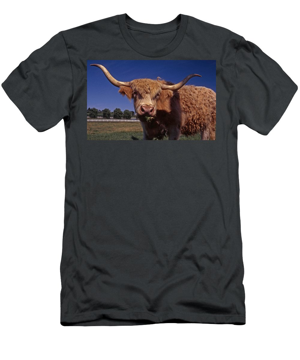Bull Men's T-Shirt (Athletic Fit) featuring the photograph A Lot A Bull by Skip Willits