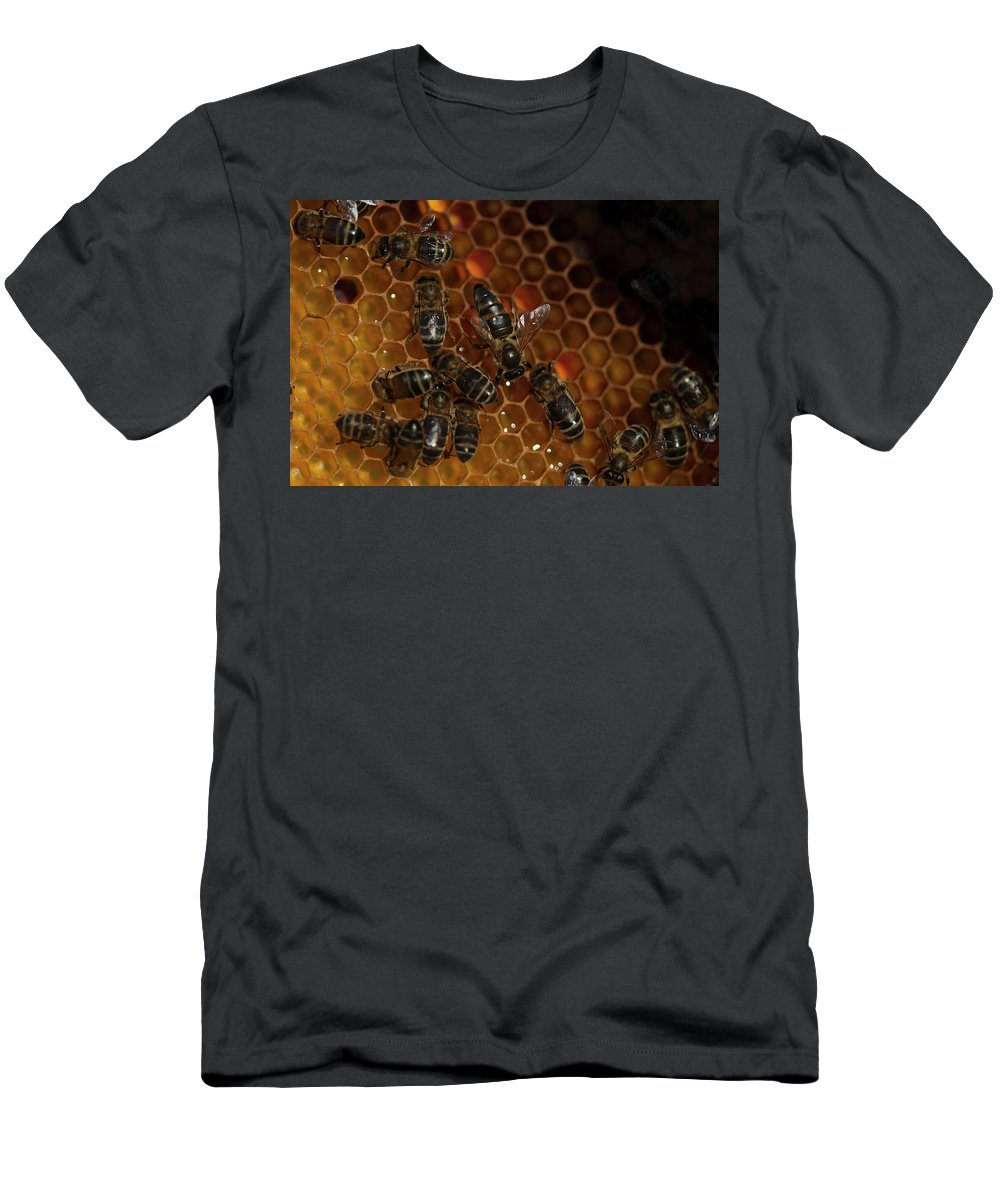 Worker Bees T-Shirt featuring the photograph A Queen Bee Walks In The Center by Chico Sanchez