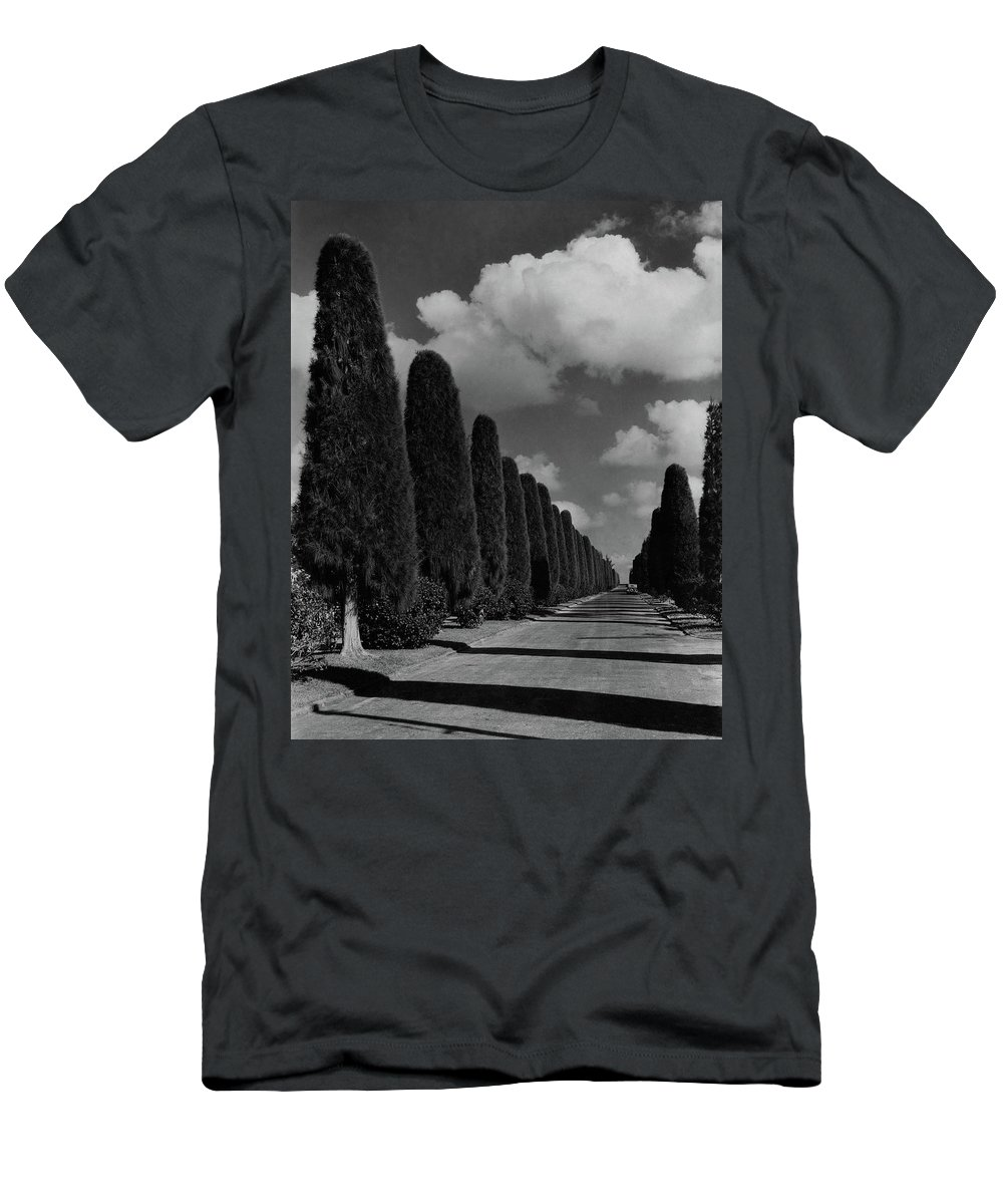 Cityscape Men's T-Shirt (Athletic Fit) featuring the photograph A Street Lined With Cypress Trees by John Kabel