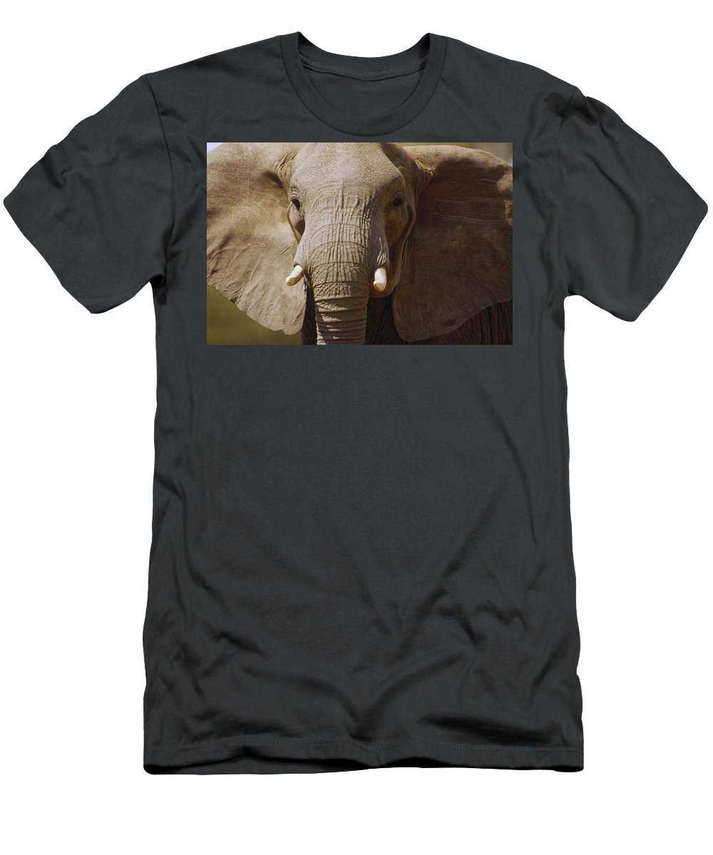 Feb0514 Men's T-Shirt (Athletic Fit) featuring the photograph African Elephant Close Up Amboseli by Gerry Ellis