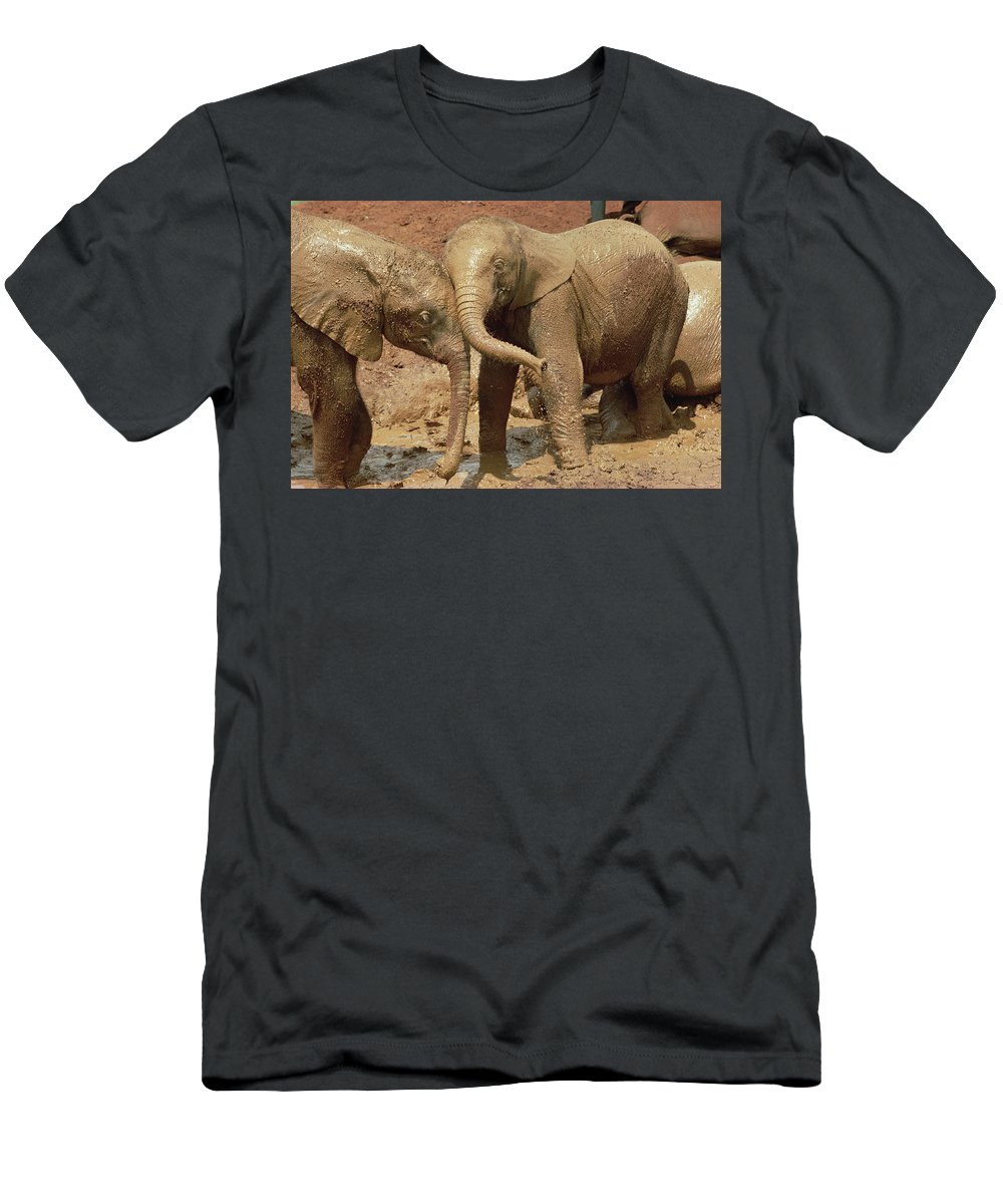 Feb0514 Men's T-Shirt (Athletic Fit) featuring the photograph African Elephant Orphans Playing In Mud by Gerry Ellis
