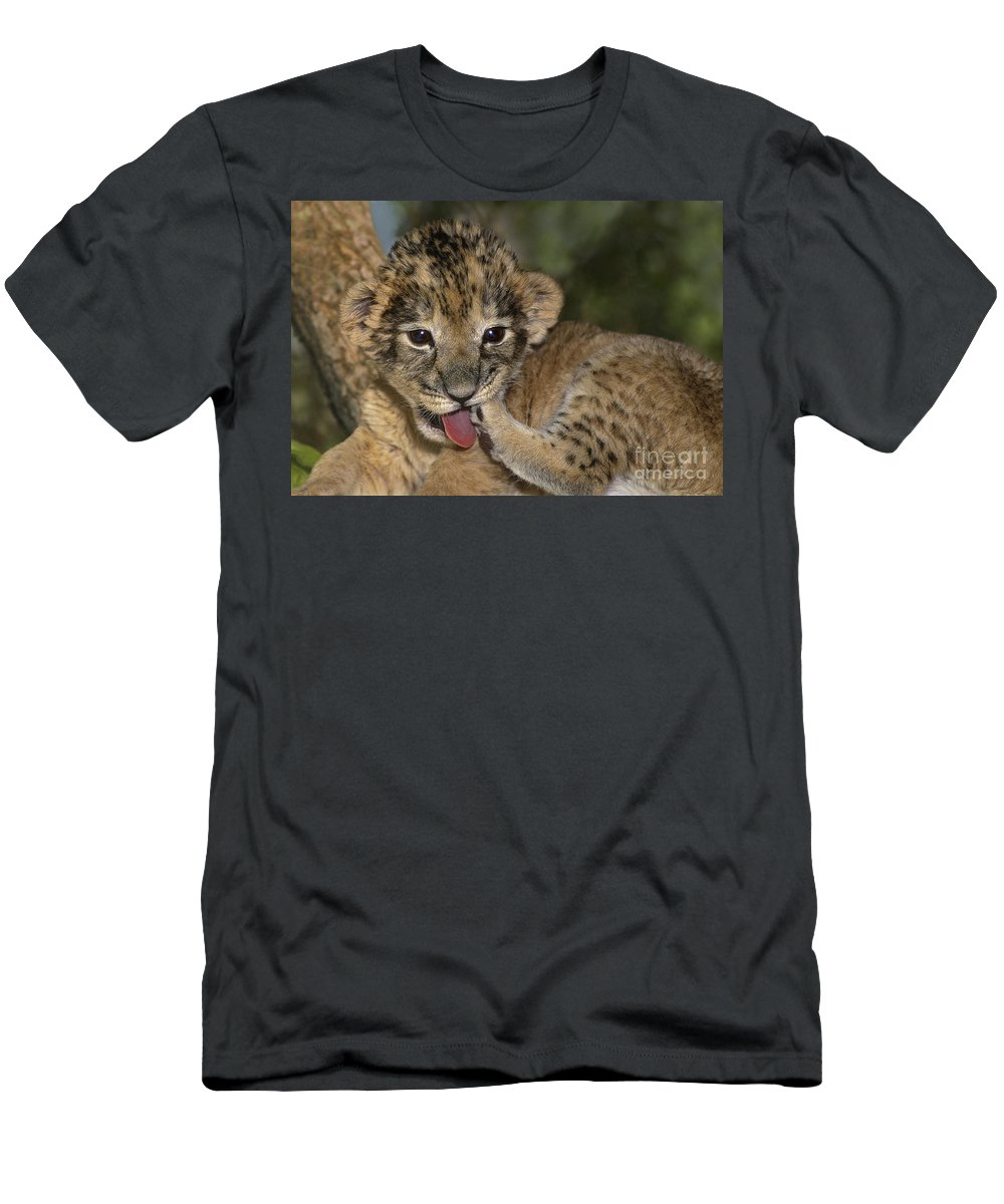 African Lion Men's T-Shirt (Athletic Fit) featuring the photograph African Lion Cub Wildlife Rescue by Dave Welling