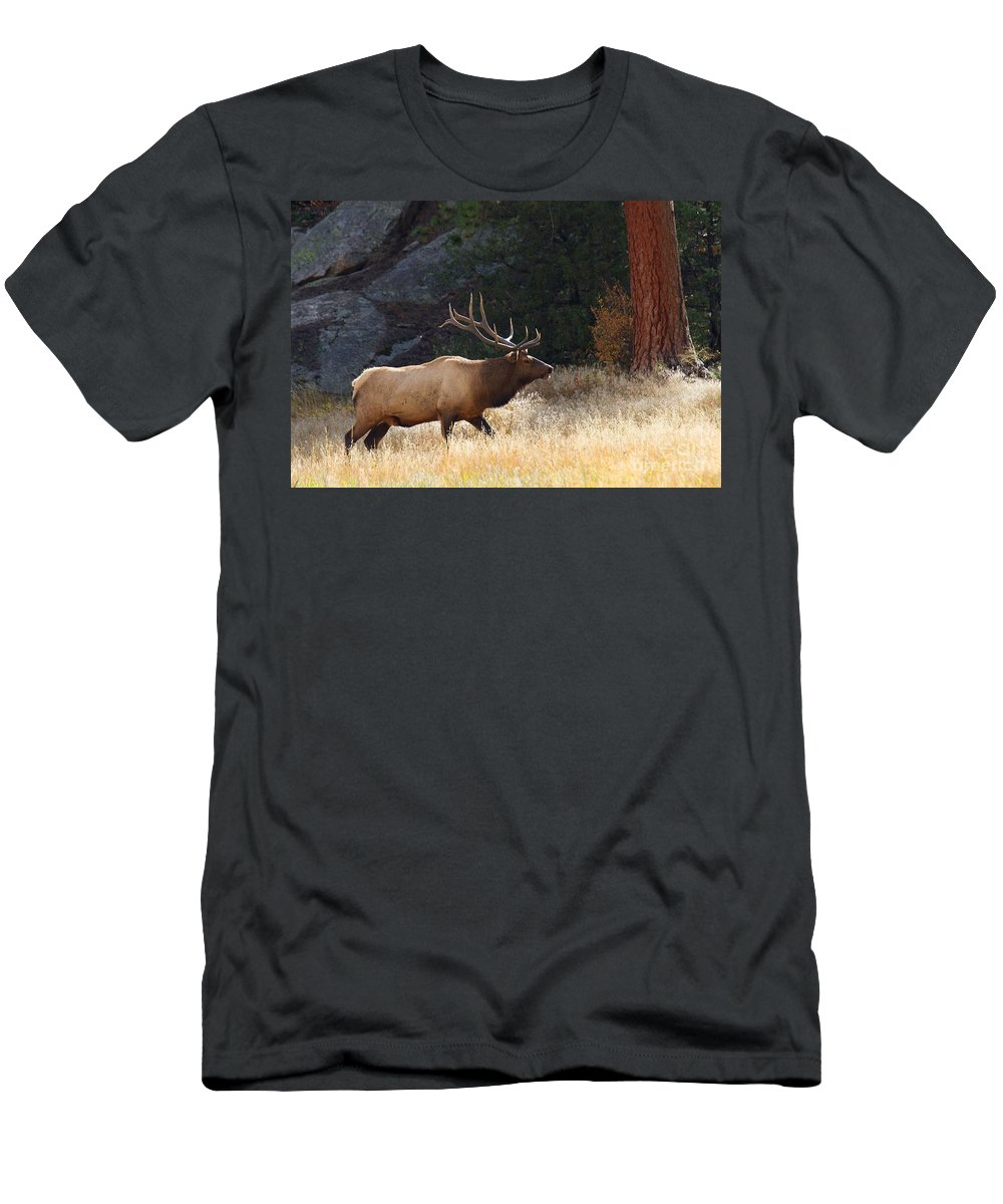 Elk Men's T-Shirt (Athletic Fit) featuring the photograph Afternoon Patrol by Jim Garrison