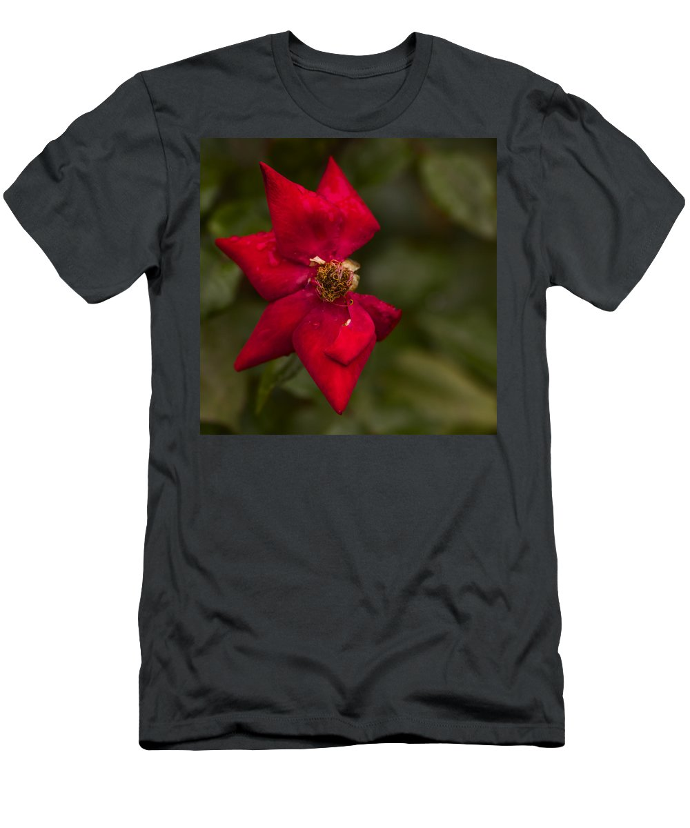 Rose Men's T-Shirt (Athletic Fit) featuring the photograph Aging Beauty by Vishwanath Bhat
