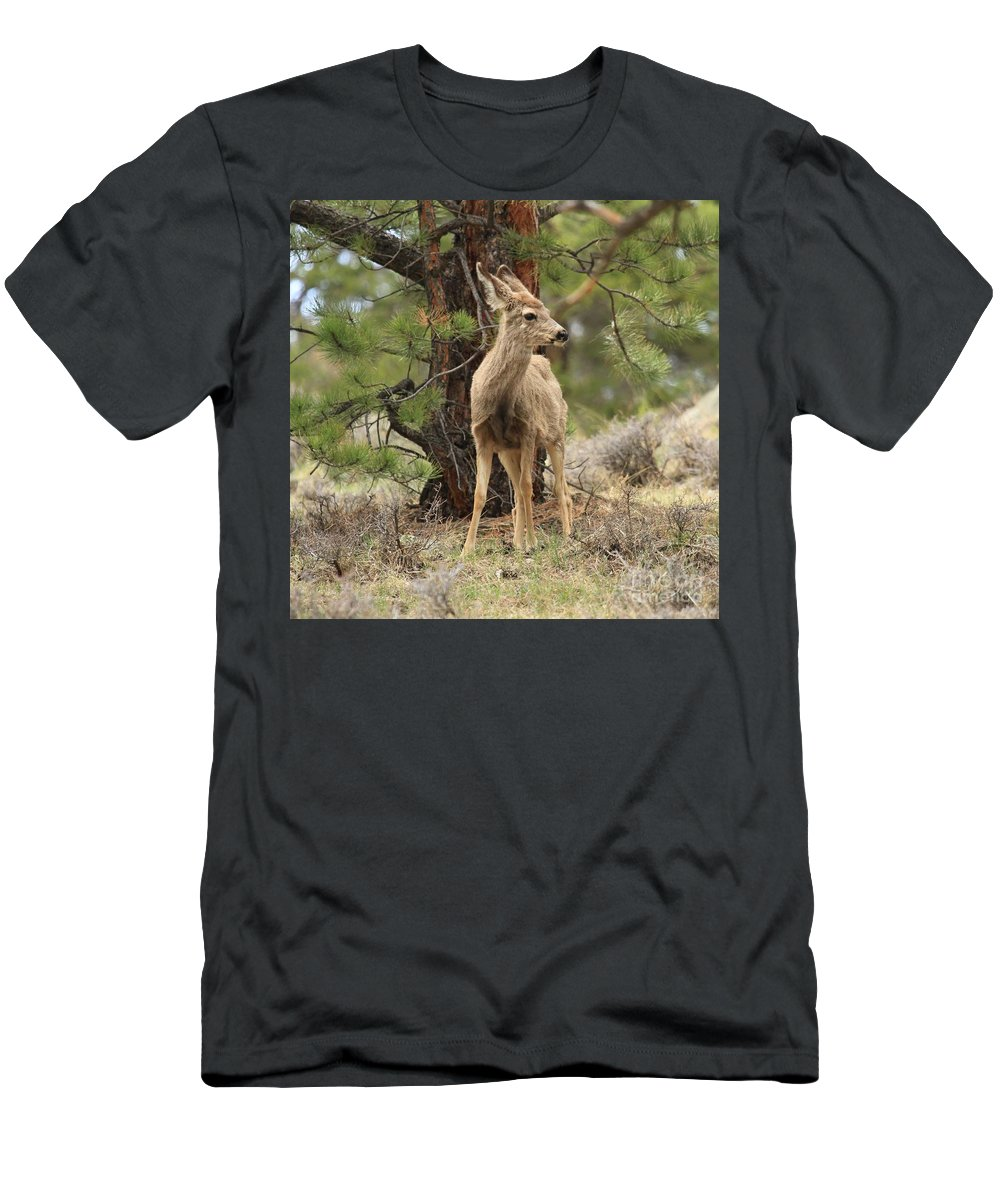 Rocky Mountain National Park Men's T-Shirt (Athletic Fit) featuring the photograph Alert In The Rockies by Adam Jewell