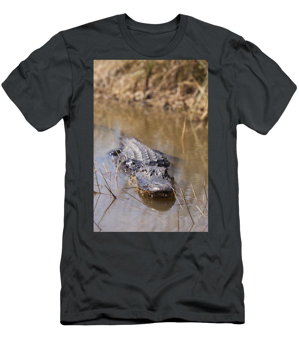 Alligator Men's T-Shirt (Athletic Fit) featuring the photograph Alligator In Evergrades by Alex Potemkin