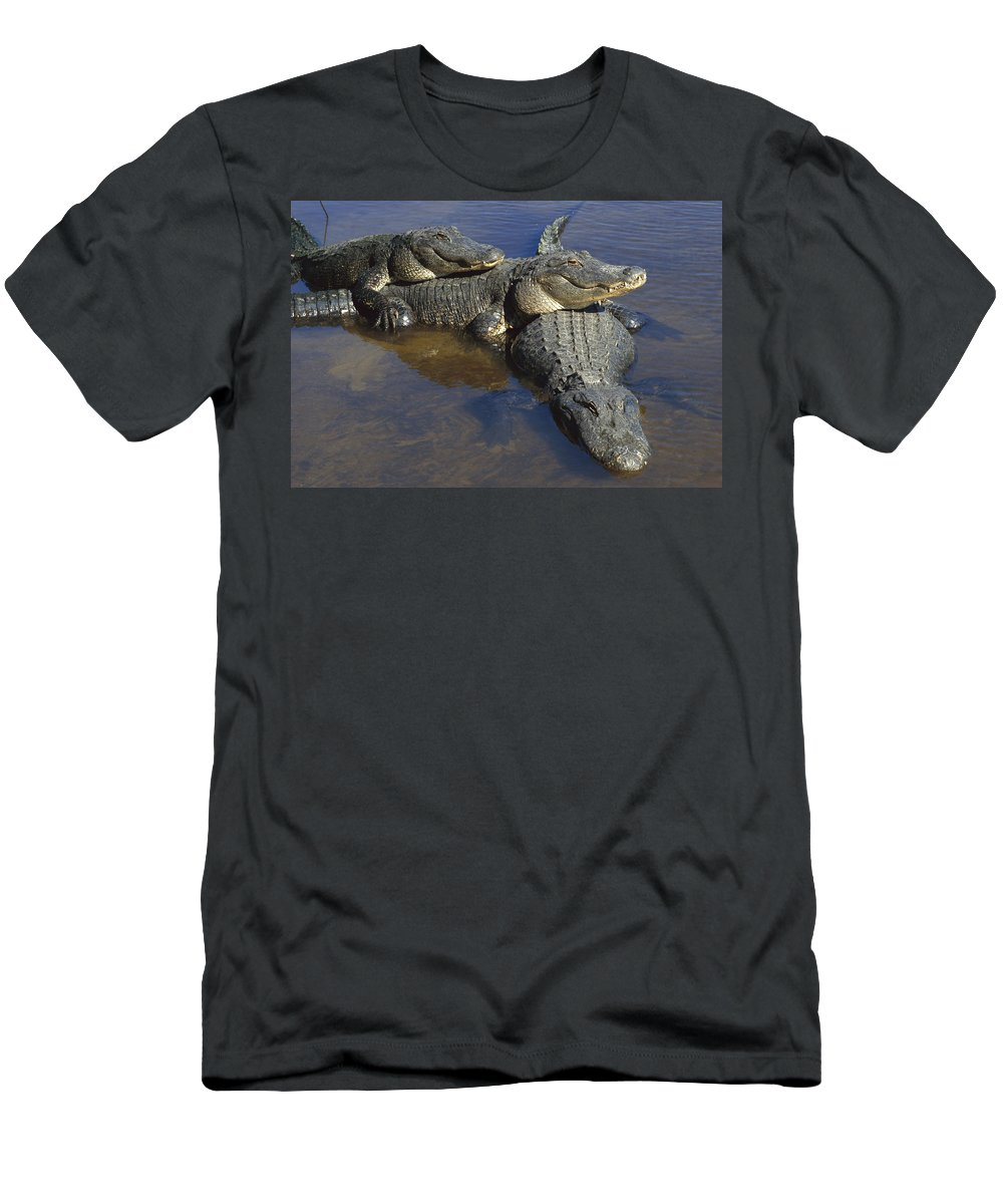 Feb0514 Men's T-Shirt (Athletic Fit) featuring the photograph American Alligators In Shallows Florida by Heidi & Hans-Juergen Koch