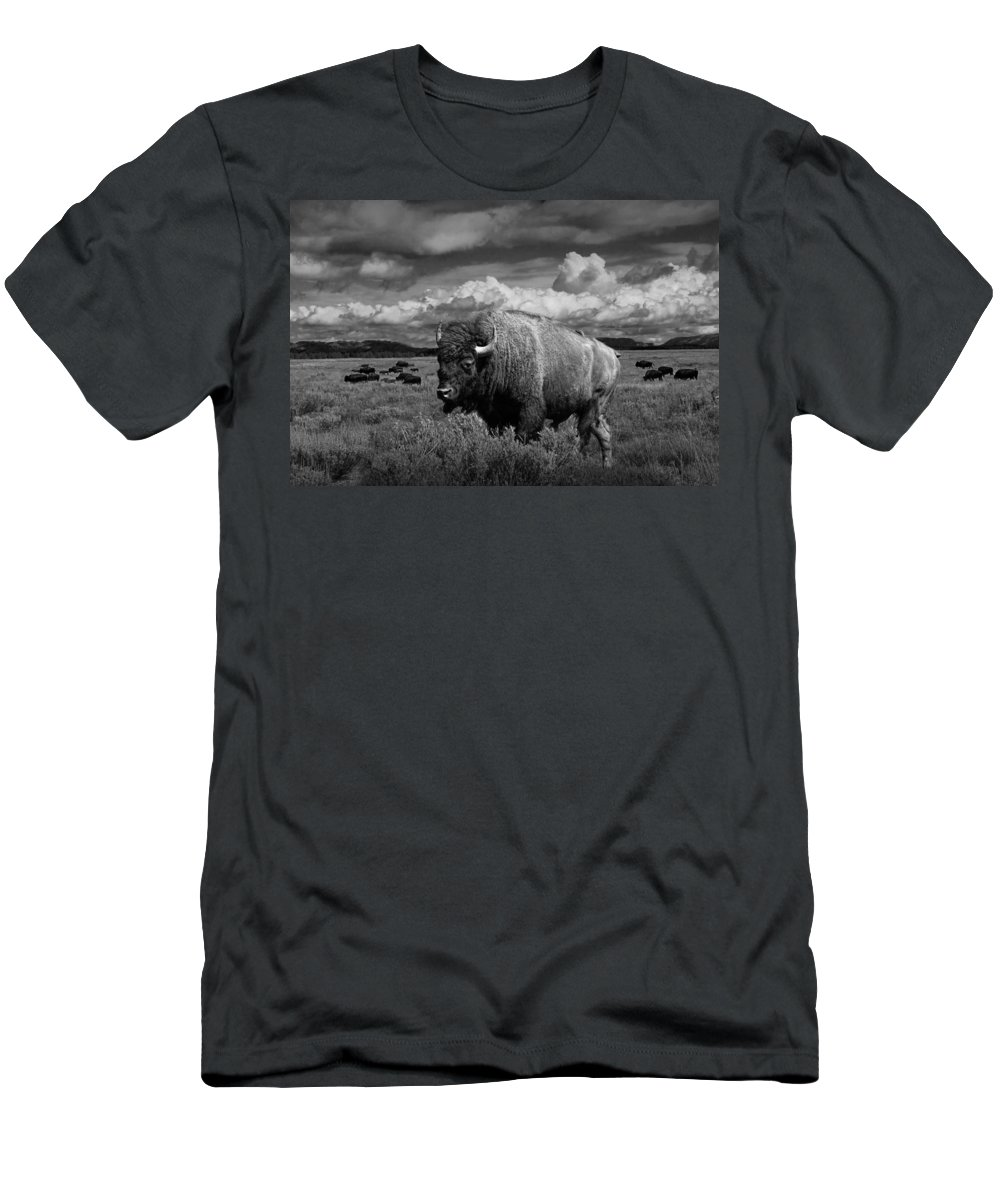 Bison Men's T-Shirt (Athletic Fit) featuring the photograph American Buffalo Or Bison In The Grand Teton National Park by Randall Nyhof
