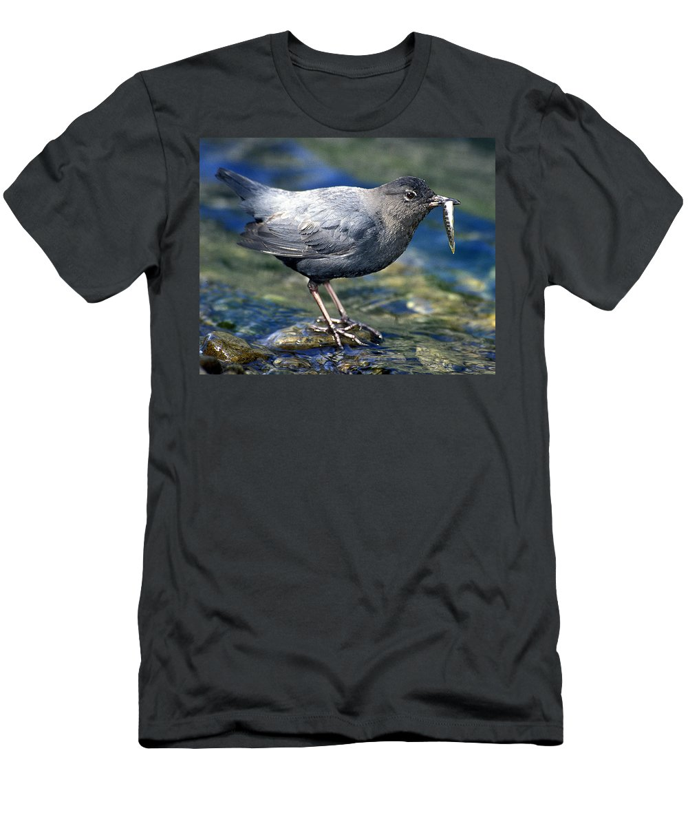 Dipper Men's T-Shirt (Athletic Fit) featuring the photograph American Dipper by Gary Beeler