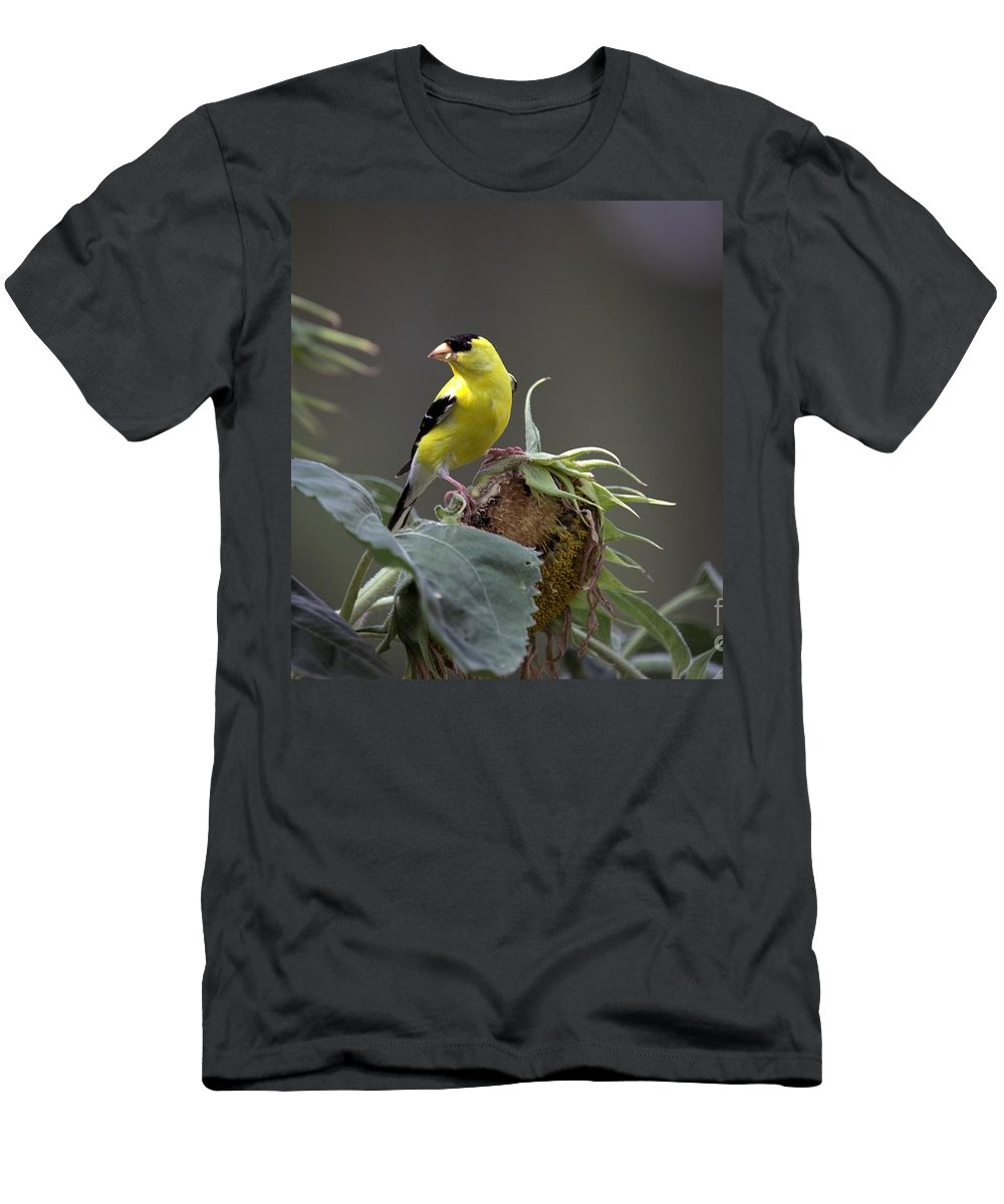 Bird Men's T-Shirt (Athletic Fit) featuring the photograph American Goldfinch 5 by Randy Matthews