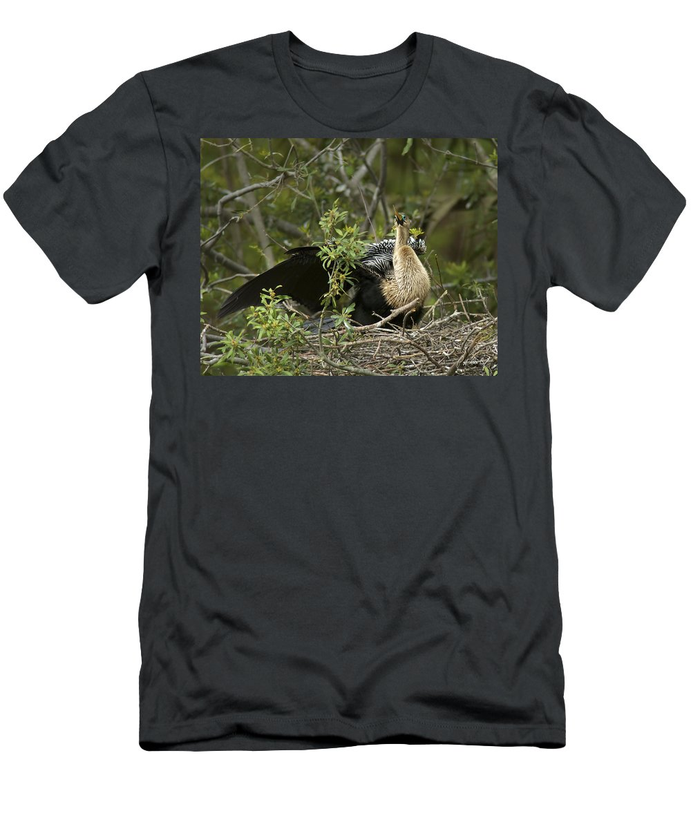 Anhinga Men's T-Shirt (Athletic Fit) featuring the photograph Anhinga Mama by Phill Doherty