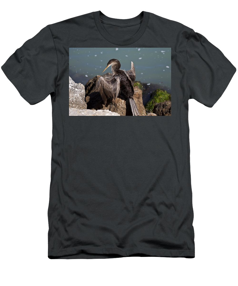 Anhinga Men's T-Shirt (Athletic Fit) featuring the photograph Anhinga by Regina Williams