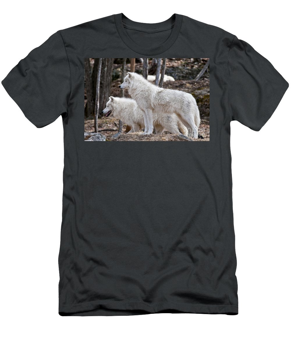Arctic Wolf Photography Men's T-Shirt (Athletic Fit) featuring the photograph Arctic Wolf Pair by Wolves Only