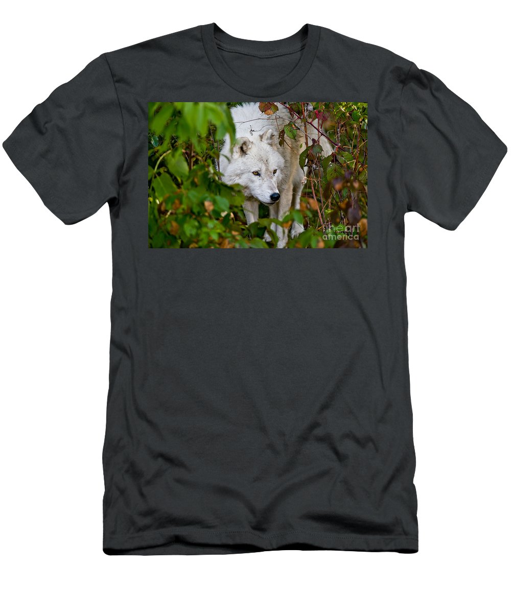 Arctic Wolf Men's T-Shirt (Athletic Fit) featuring the photograph Arctic Wolf Pictures 1228 by World Wildlife Photography