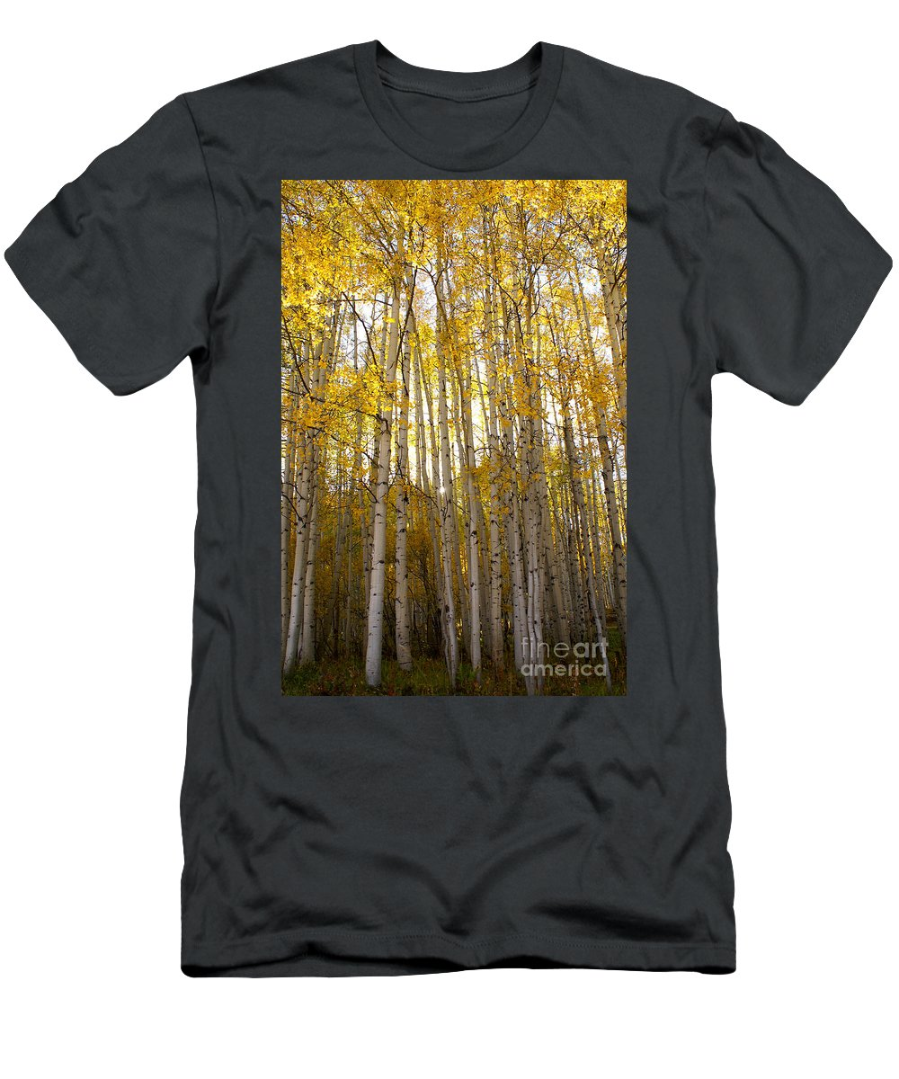 Aspen Men's T-Shirt (Athletic Fit) featuring the photograph Aspen Autumn by Kelly Black