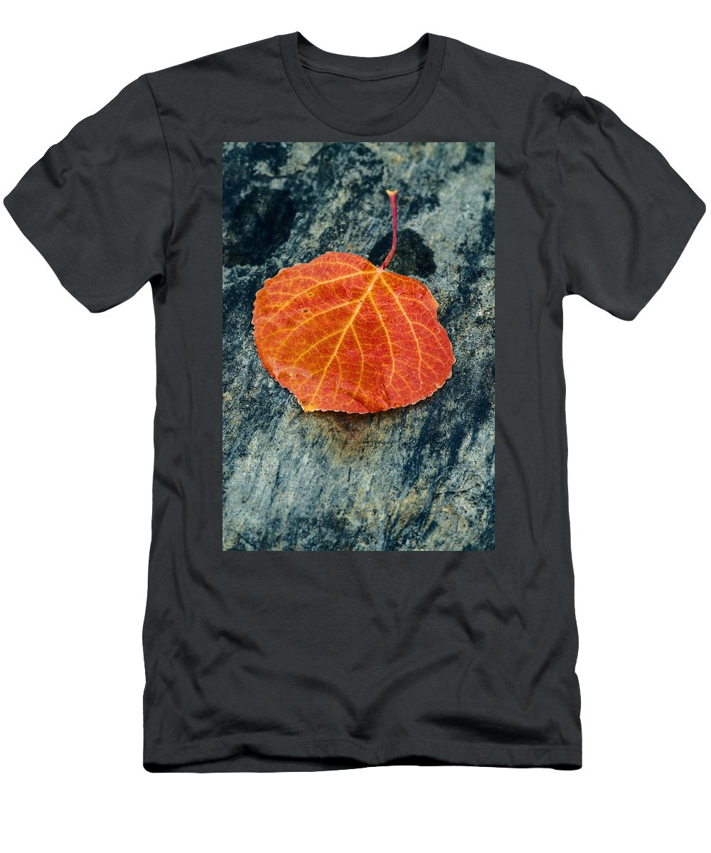 Aspen Leaf Men's T-Shirt (Athletic Fit) featuring the photograph Aspen Leaf by Vishwanath Bhat