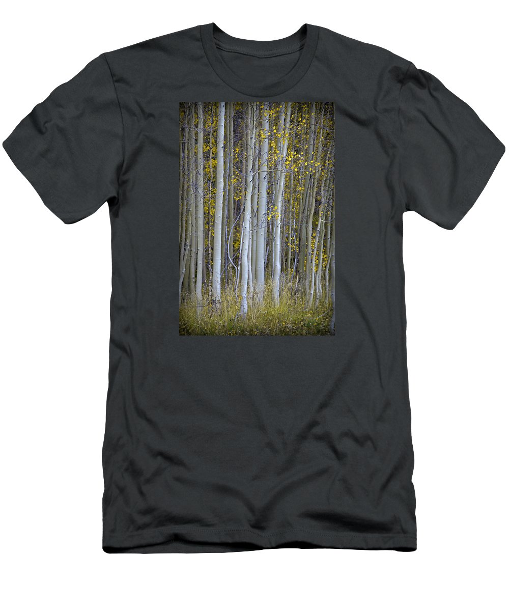 Tree Trunk Men's T-Shirt (Athletic Fit) featuring the photograph Aspen Stand by John Stephens