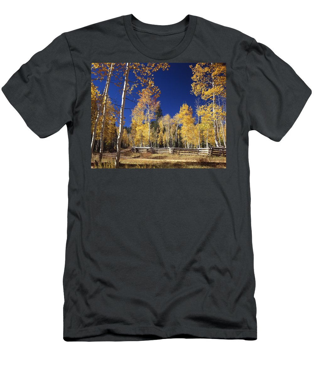 Aspens Men's T-Shirt (Athletic Fit) featuring the photograph Aspens In Fall by Ed Cooper Photography