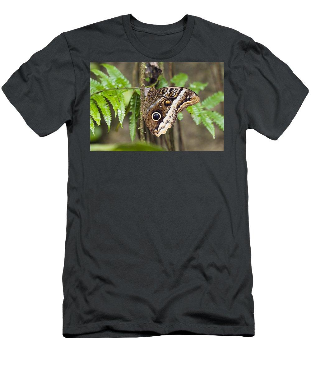 Feb0514 Men's T-Shirt (Athletic Fit) featuring the photograph Atreus Owl Portrait Costa Rica by Konrad Wothe
