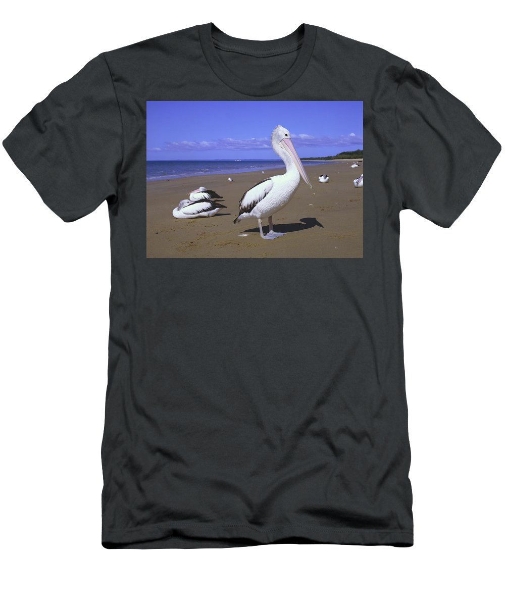 Feb0514 Men's T-Shirt (Athletic Fit) featuring the photograph Australian Pelican On Beach by Minoru Okuda
