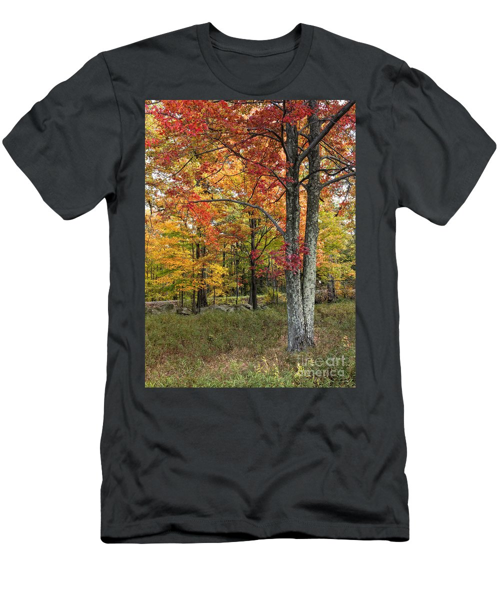 Fall Men's T-Shirt (Athletic Fit) featuring the photograph Autumn by Claudia Kuhn