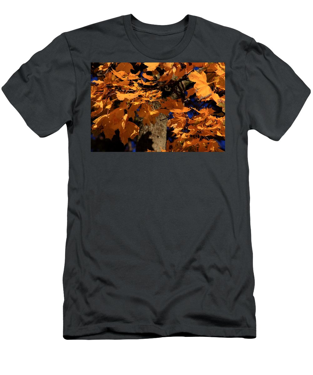 Fall Men's T-Shirt (Athletic Fit) featuring the photograph Autumn Colors by David Dufresne