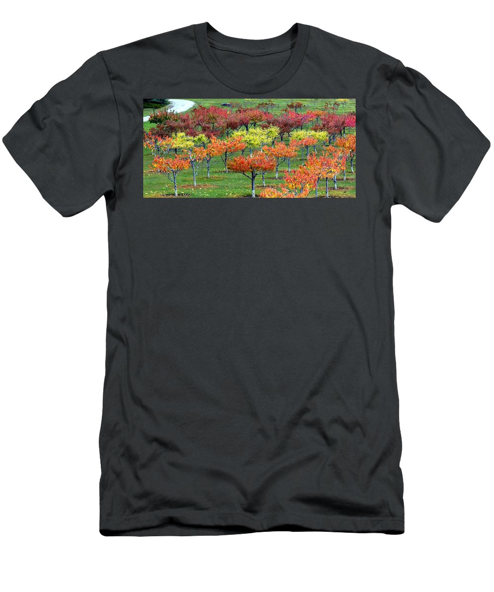 Orchard Men's T-Shirt (Athletic Fit) featuring the photograph Autumn Hillside Orchard by Will Borden