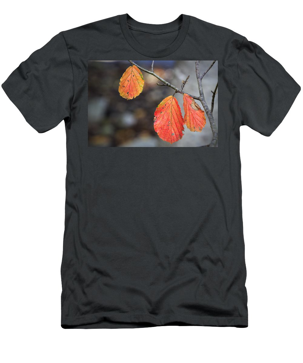 Leaves Men's T-Shirt (Athletic Fit) featuring the photograph Autumn Leaves by Fran Gallogly