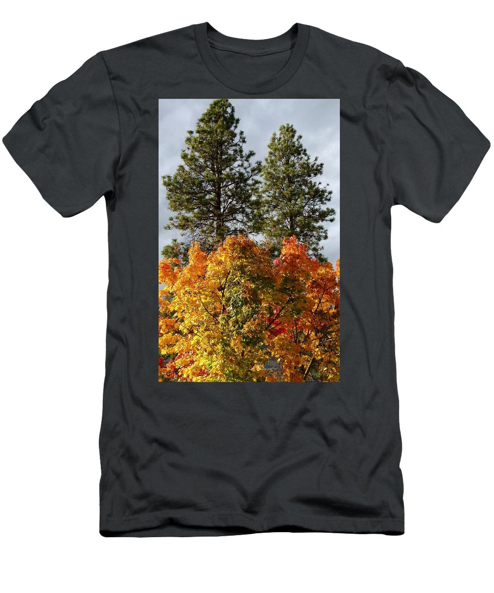 Autumn Maple With Pines Men's T-Shirt (Athletic Fit) featuring the photograph Autumn Maple With Pines by Will Borden