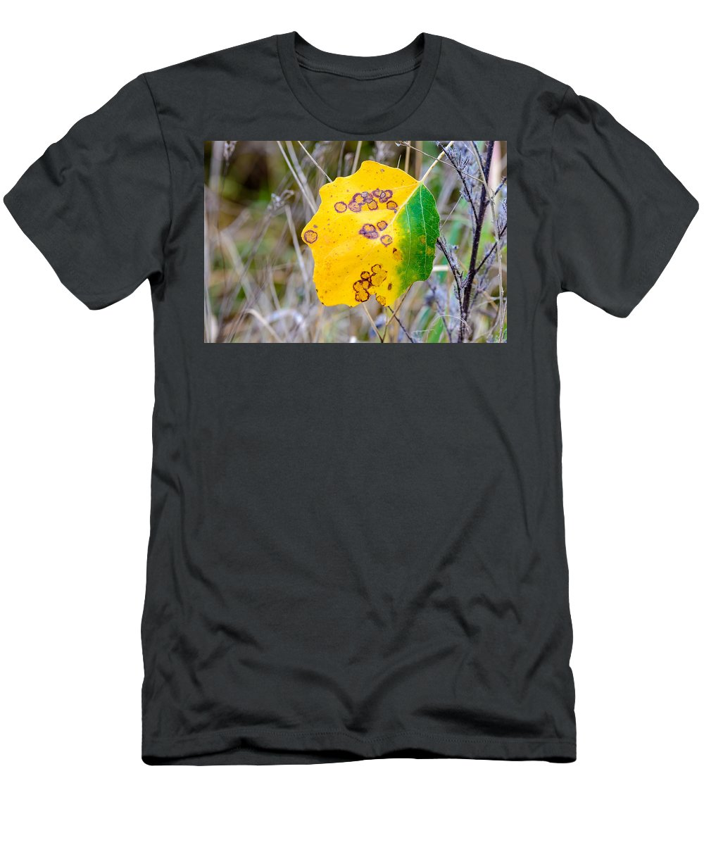 Autumn Men's T-Shirt (Athletic Fit) featuring the photograph Autumn Poplar Leaves by Alain De Maximy
