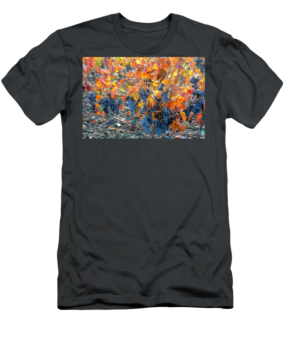 Grapes Men's T-Shirt (Athletic Fit) featuring the photograph Autumn Vineyard Sunlight by Carol Groenen