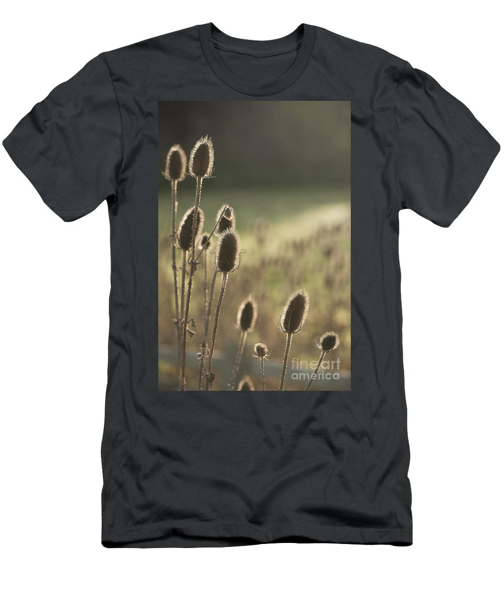 Anne Gilbert Men's T-Shirt (Athletic Fit) featuring the photograph Backlit Teasel by Anne Gilbert