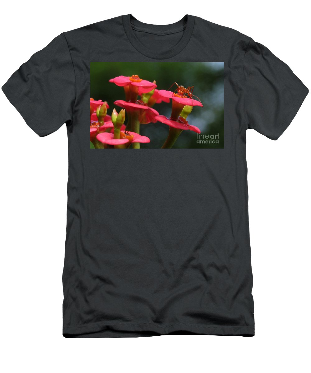 Flowers Men's T-Shirt (Athletic Fit) featuring the photograph Backyard Beauties by Douglas Stucky