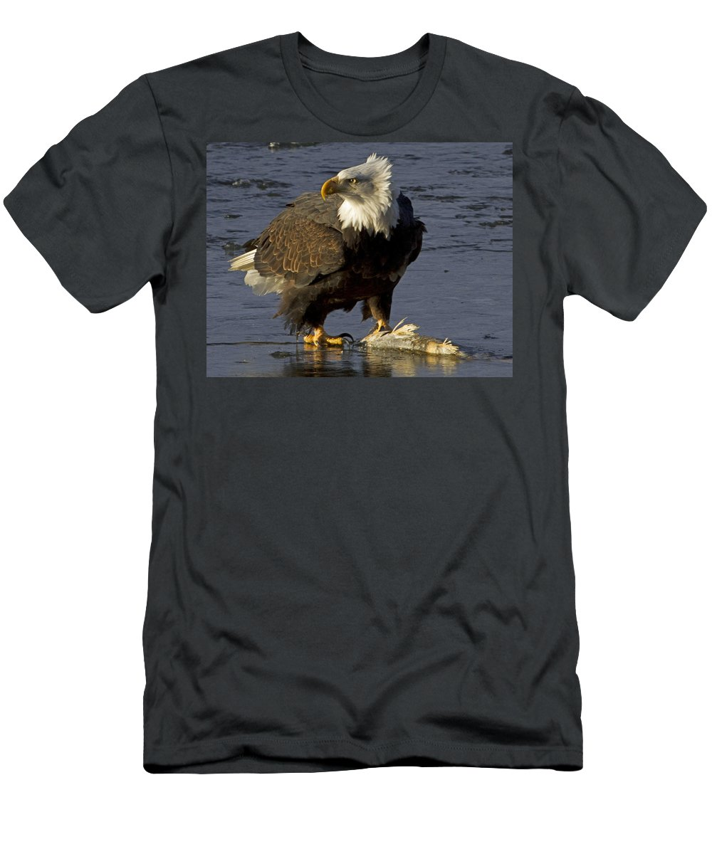 American Men's T-Shirt (Athletic Fit) featuring the photograph Bald Eagle by Dee Carpenter