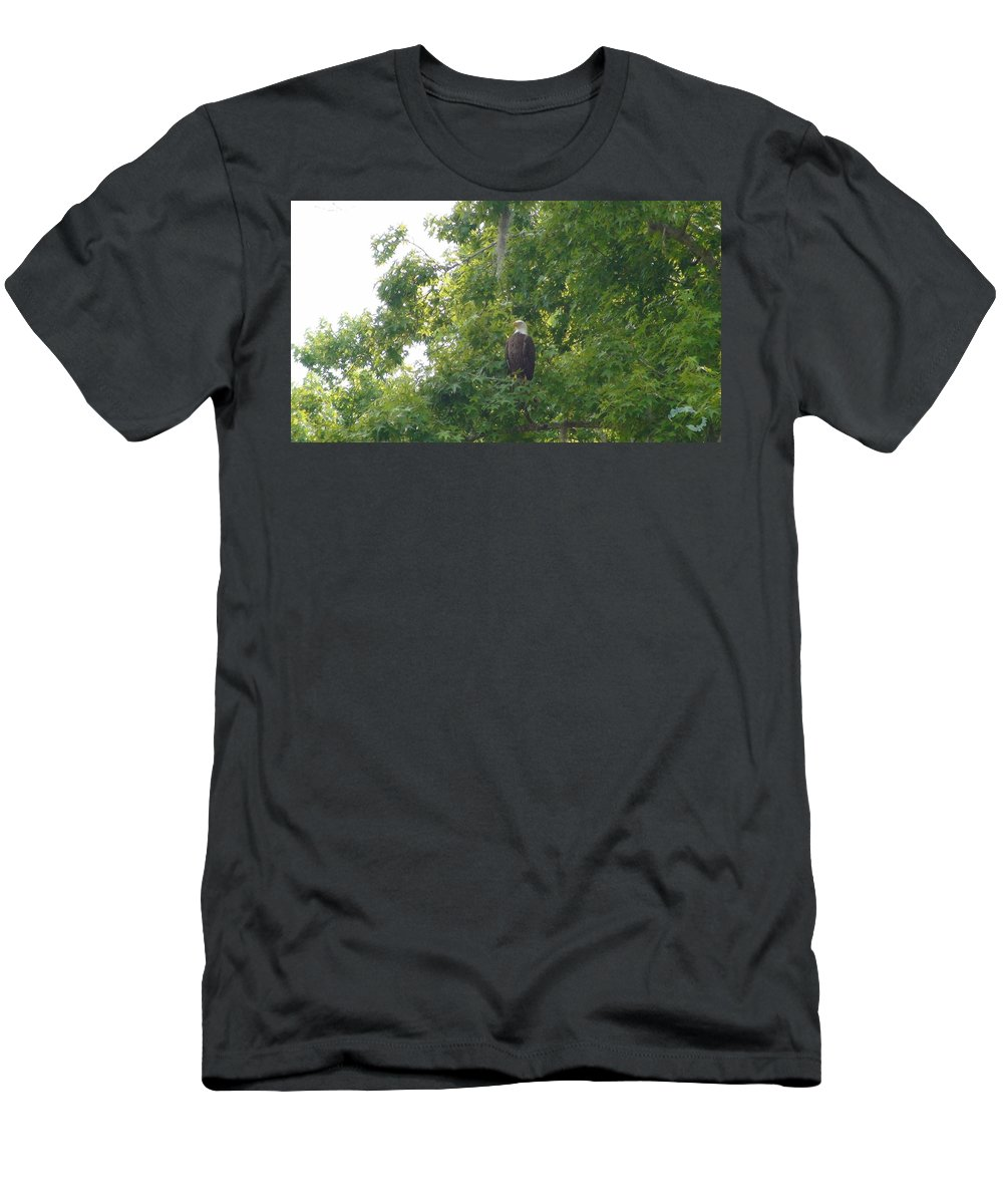 Wildlife Men's T-Shirt (Athletic Fit) featuring the photograph Bald Eagle In Sweetgum Tree by Robert Norcia