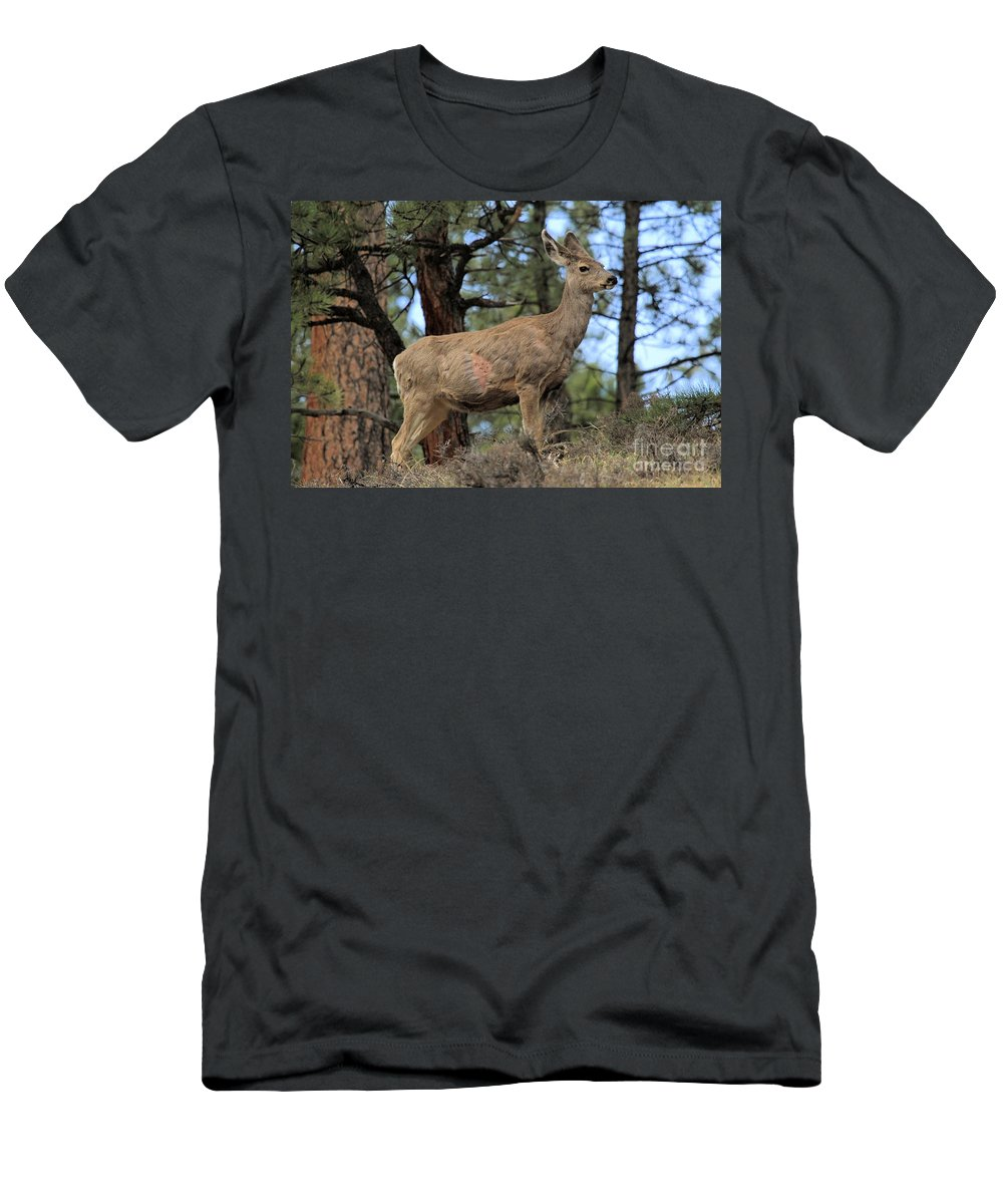Deer Men's T-Shirt (Athletic Fit) featuring the photograph Battle Scarred by Adam Jewell
