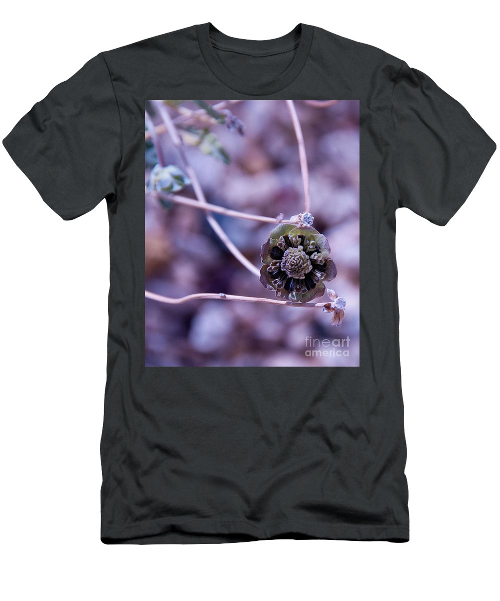 Beauty After Bloom Is A Desert Dry Flower Men's T-Shirt (Athletic Fit) featuring the photograph Beauty After Bloom by Mae Wertz