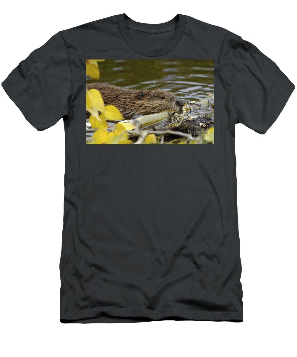 Beaver Men's T-Shirt (Athletic Fit) featuring the photograph Beaver by John Shaw