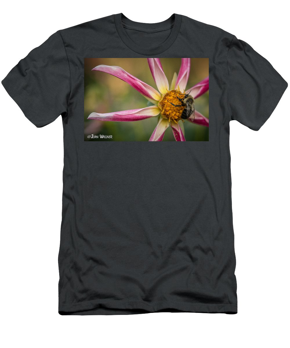 Dahlia Men's T-Shirt (Athletic Fit) featuring the photograph Bee Enjoying A Willie Willie Dahlia by Joan Wallner