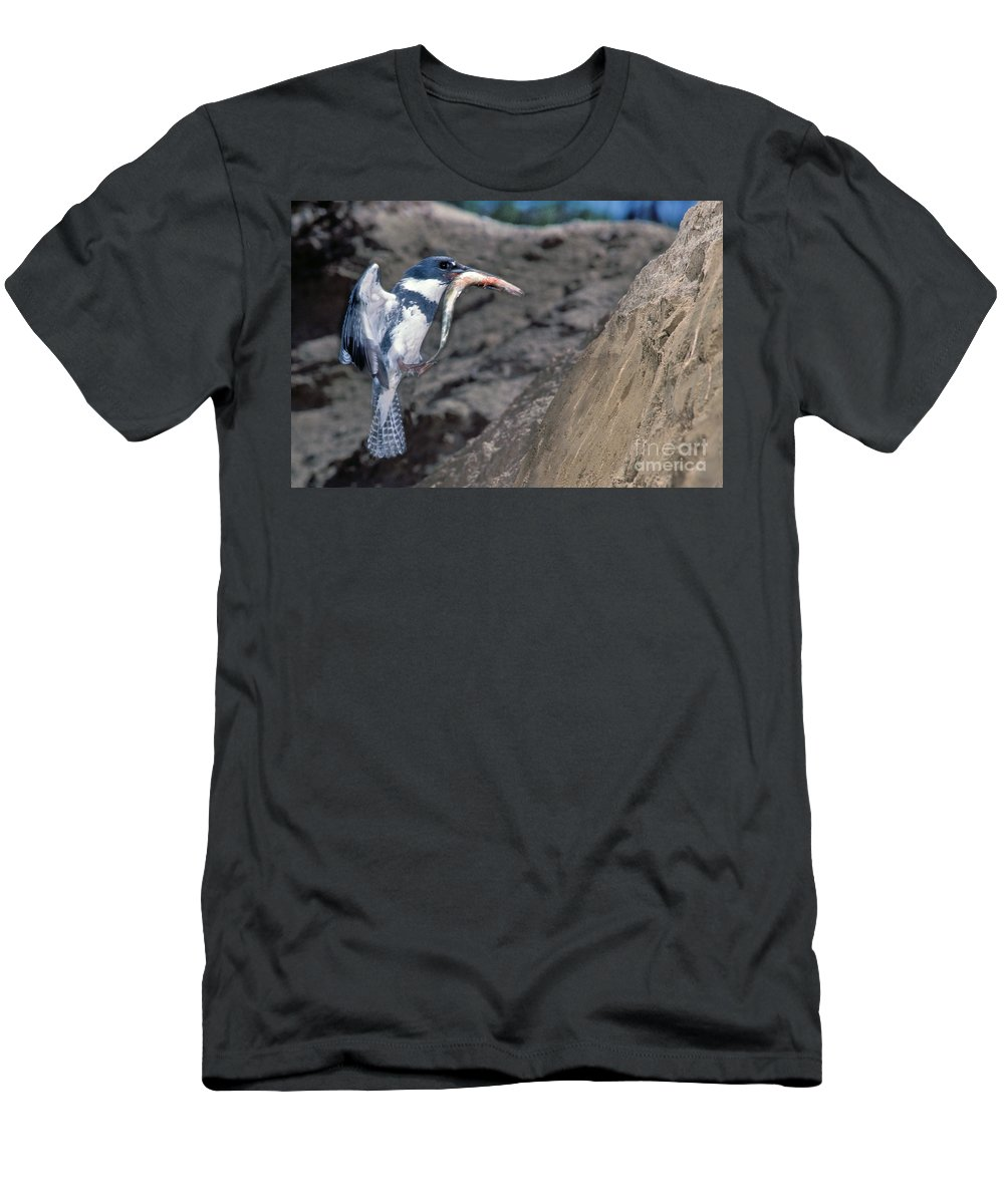 Belted Kingfisher Men's T-Shirt (Athletic Fit) featuring the photograph Belted Kingfisher With Prey by Anthony Mercieca