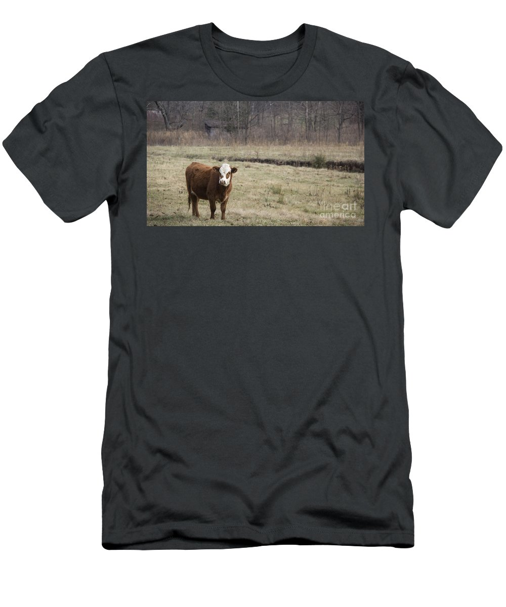 Cow Men's T-Shirt (Athletic Fit) featuring the photograph Big Red 2 by Teresa Mucha