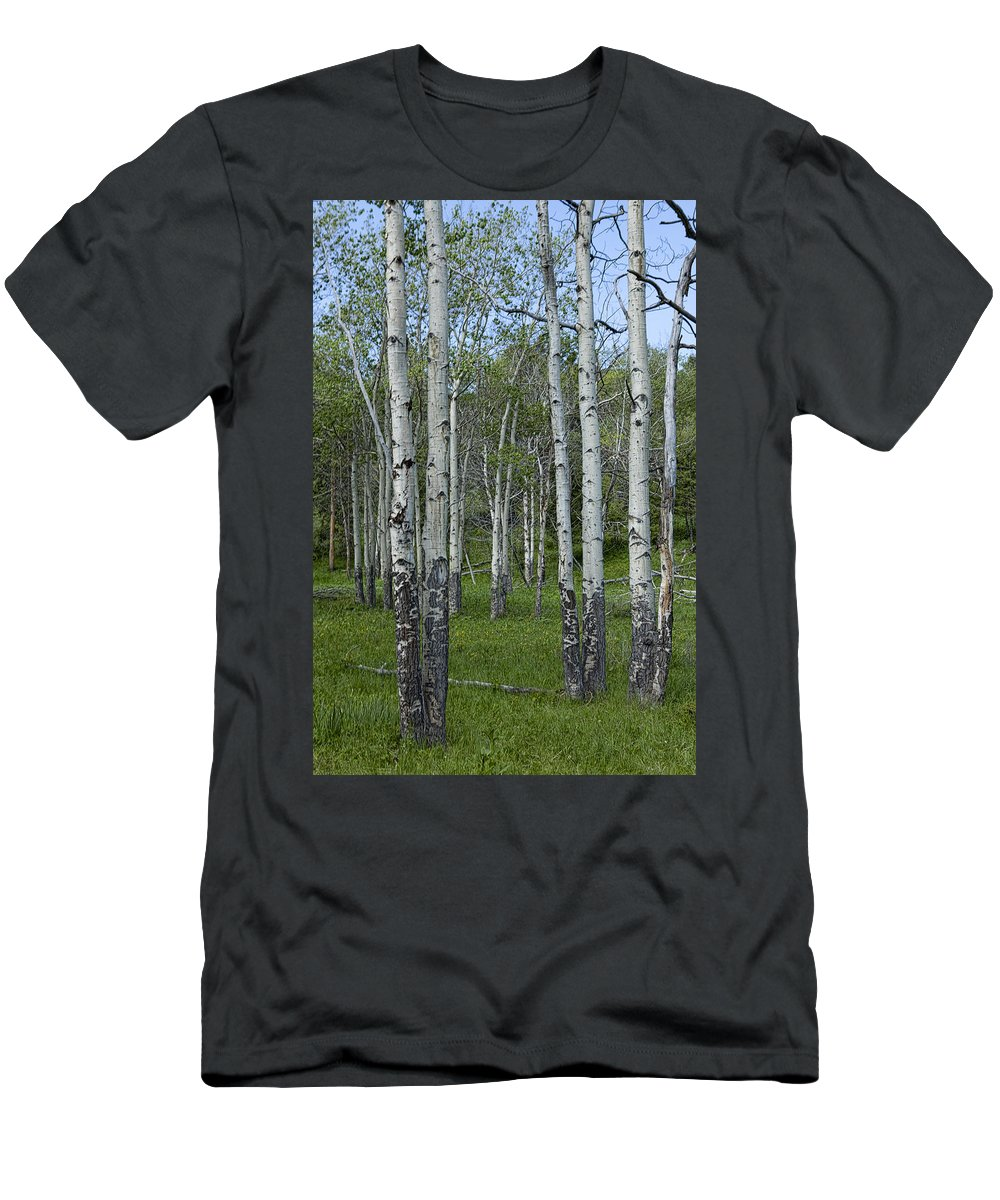 Art Men's T-Shirt (Athletic Fit) featuring the photograph Birch Trees In A Grove No. 0148 by Randall Nyhof