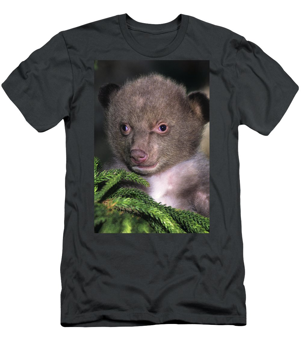 Black Bear Men's T-Shirt (Athletic Fit) featuring the photograph Black Bear Cub Portrait Wildlife Rescue by Dave Welling