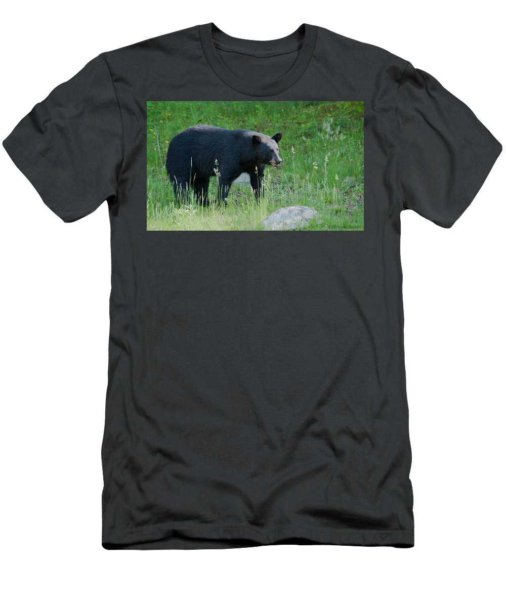 Bear Men's T-Shirt (Athletic Fit) featuring the photograph Black Bear Female by Brenda Jacobs