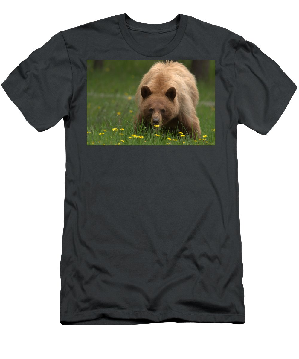 Bear Men's T-Shirt (Athletic Fit) featuring the photograph Black Bear by Frank Madia