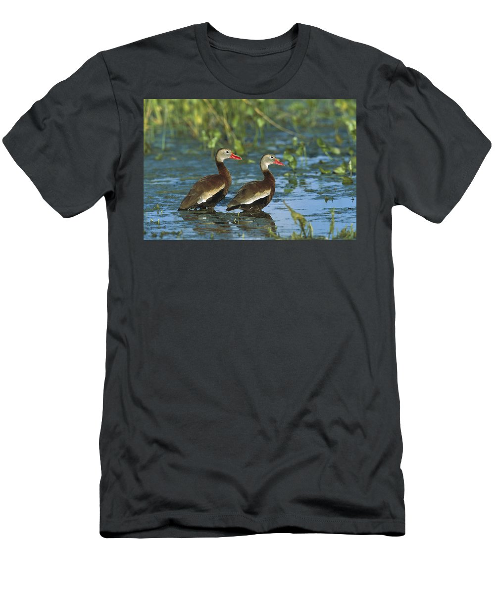 Feb0514 Men's T-Shirt (Athletic Fit) featuring the photograph Black-bellied Whistling Ducks Wading by Tom Vezo