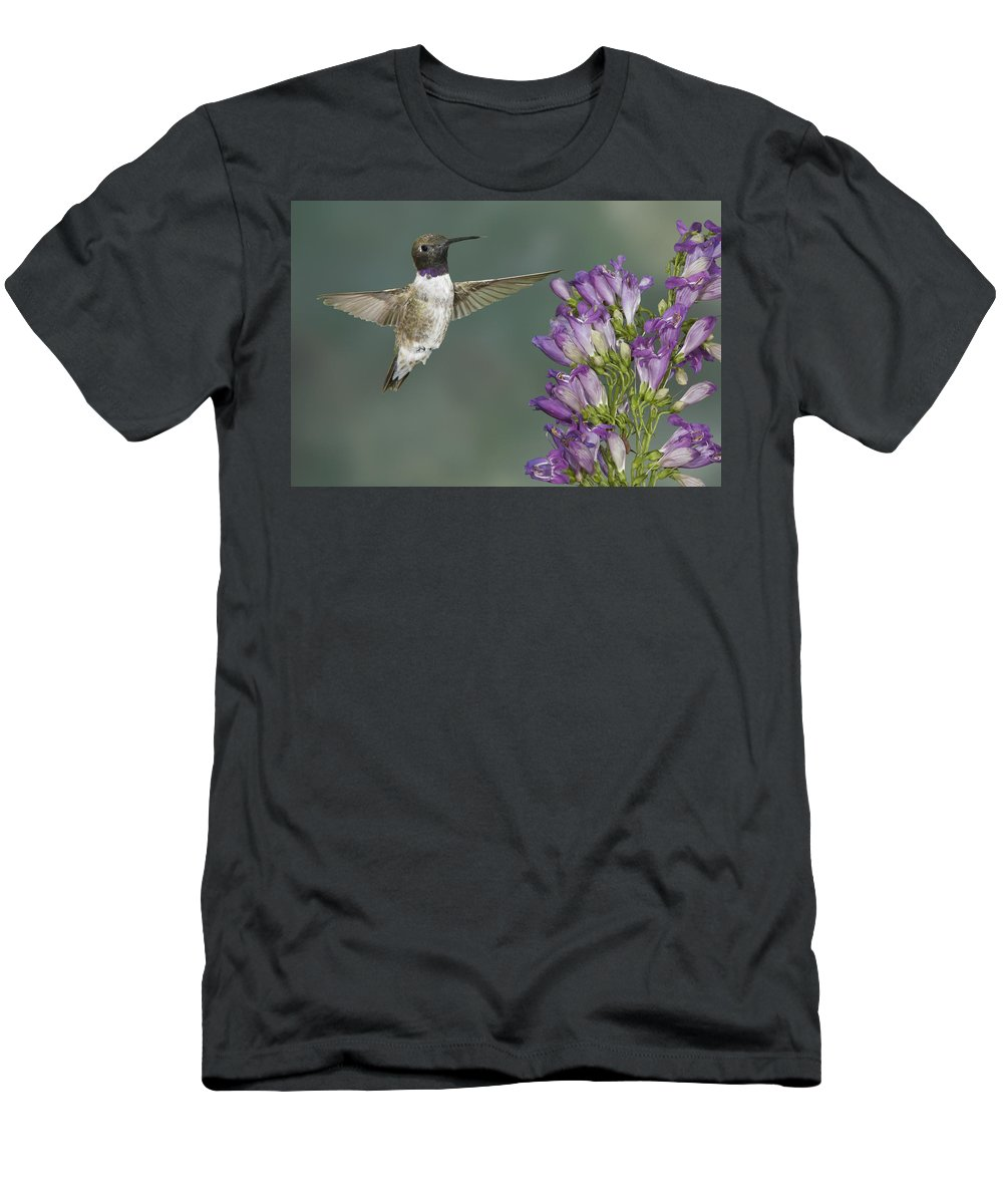 Action Men's T-Shirt (Athletic Fit) featuring the photograph Black Chinned Hummingbird 2 by Jack Milchanowski