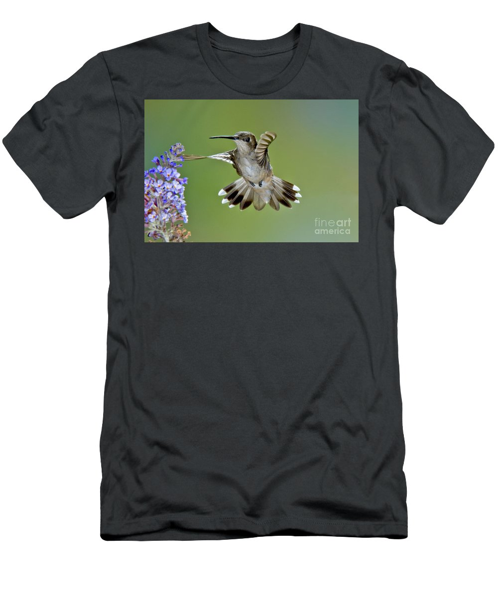 Archilochus Alexandri Men's T-Shirt (Athletic Fit) featuring the photograph Black-chinned Hummingbird by Anthony Mercieca