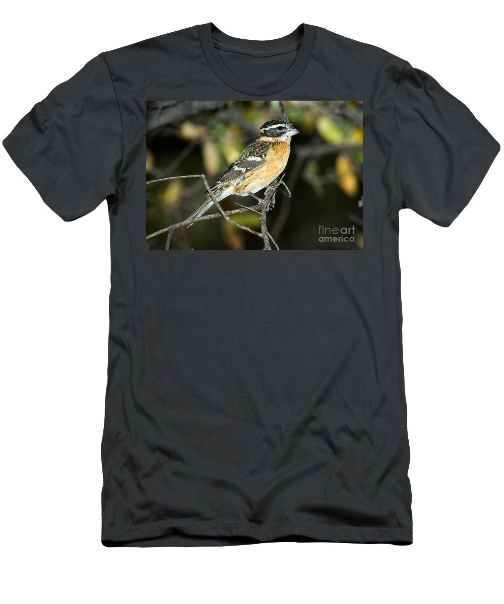 Fauna Men's T-Shirt (Athletic Fit) featuring the photograph Black-headed Grosbeak Female by Anthony Mercieca
